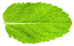 Green leaf of mint (Peppermint) isolated on white Stock Photography