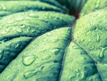 Green leaf with moisture Royalty Free Stock Image
