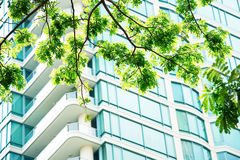 Green leaf morning sun wall windows Condo Condominium. Royalty Free Stock Images