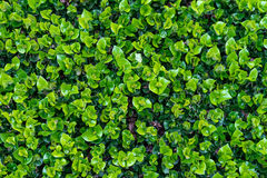 Green leaf in natural Stock Photos