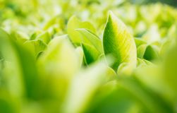 Green leaf in natural background stock photography
