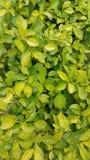 Green leaf Stock Photos