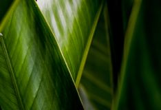 Green Leaf. Nature background stock photos