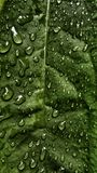 Green leaf in nature Stock Image