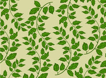 Green Leaf Nature Pattern Stock Photography