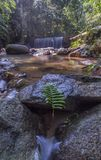 A green leaf near the stone. Green leaf near the stone at waterfall during daylight with crystal clear watern Stock Photos
