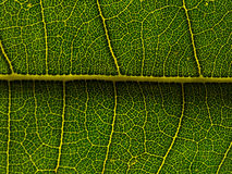Green Leaf Network Royalty Free Stock Photography