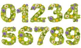 Green leaf number Stock Images