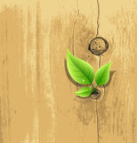 Green Leaf on old wood background Royalty Free Stock Image