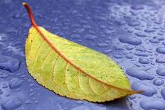 Free Green Leaf On The Blue Sheet Royalty Free Stock Photos - 4647888