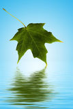 Green leaf over water Royalty Free Stock Image
