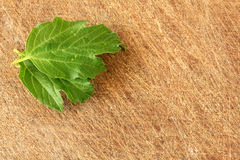 Green leaf over wood background Stock Images