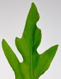 green leaf palm Stock Photos