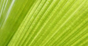 Green leaf palm texture. Abstract pattern of foliage plant in nature stock video footage