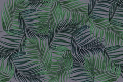 Green leaf of palm tree Stock Image