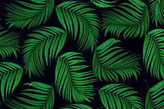 Green leaf of palm tree Royalty Free Stock Photos