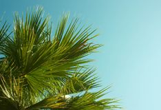 Green leaf of palm tree on blue sky background. Vintage toned and stylized Royalty Free Stock Image