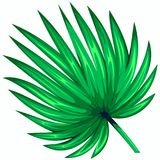 Green leaf of palm tree isolated on white background. Palm leaf icon. Vector illustration stock illustration