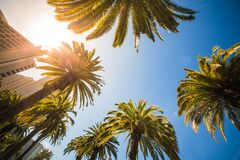 Green Leaf Palm Trees Near White Structure Royalty Free Stock Images