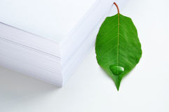 Green leaf and paper Stock Images