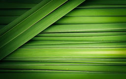 Green leaf of Papyrus abstract Stock Photo