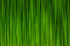Green leaf of Papyrus abstract Royalty Free Stock Images