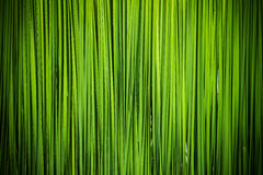 Green leaf of Papyrus abstract Royalty Free Stock Photos