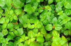 Green leaf pattern Stock Images