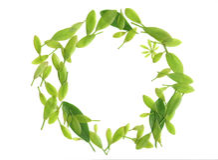 Green Leaf Pattern Royalty Free Stock Photos