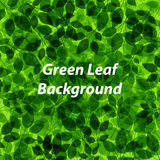 Green leaf pattern. Abstract background with green leaf pattern, Vector Stock Image