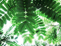 Green leaf pattern, abstract greenery background. Royalty Free Stock Photo