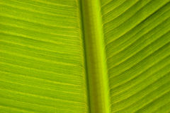 Green Leaf Pattern Background. The surface of the leaf of the tree Stock Image