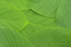 Green leaf pattern background Stock Photos