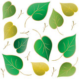 Green leaf pattern Royalty Free Stock Photography