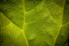 Green leaf pattern Stock Image
