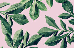 Green leaf pattern on pink. Background Stock Photos