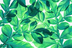 Green leaf pattern on the surface.,. Green leaf pattern on the surface. Creative tropical green leaves layout. Nature spring concept. Flat lay royalty free stock photography
