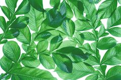 Green leaf pattern on the surface. Creative tropical green leaves layout. Nature spring concept. Flat lay royalty free illustration
