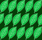 Green leaf pattern. Vector seamless patterns can be used for wallpaper pattern fills and background Royalty Free Stock Image