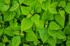 Green leaf pattern Stock Photos