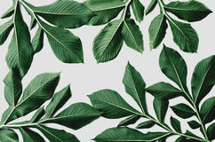 Green leaf pattern on white. Background Stock Photos