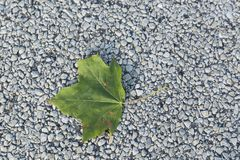 Single Green Leaf of Summer on Pavement Royalty Free Stock Photo