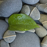 Green leaf and pebble Royalty Free Stock Photography