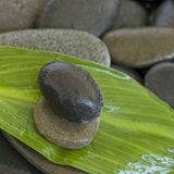 Green leaf and pebble Stock Images