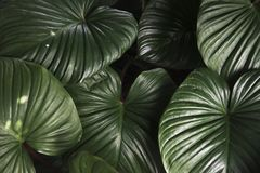 Green Leaf Plant Stock Photo
