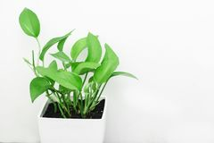 Green Leaf Plant Stock Photography