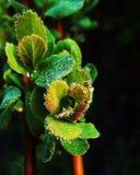 Green Leaf Plant Royalty Free Stock Photos