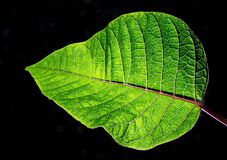 Green Leaf Plant Stock Photo