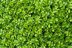 Green Leaf Plant Background Stock Images