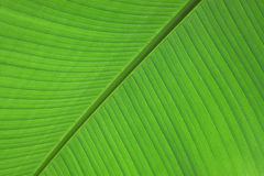 Green leaf plant close up. Abstract natural background Stock Photo